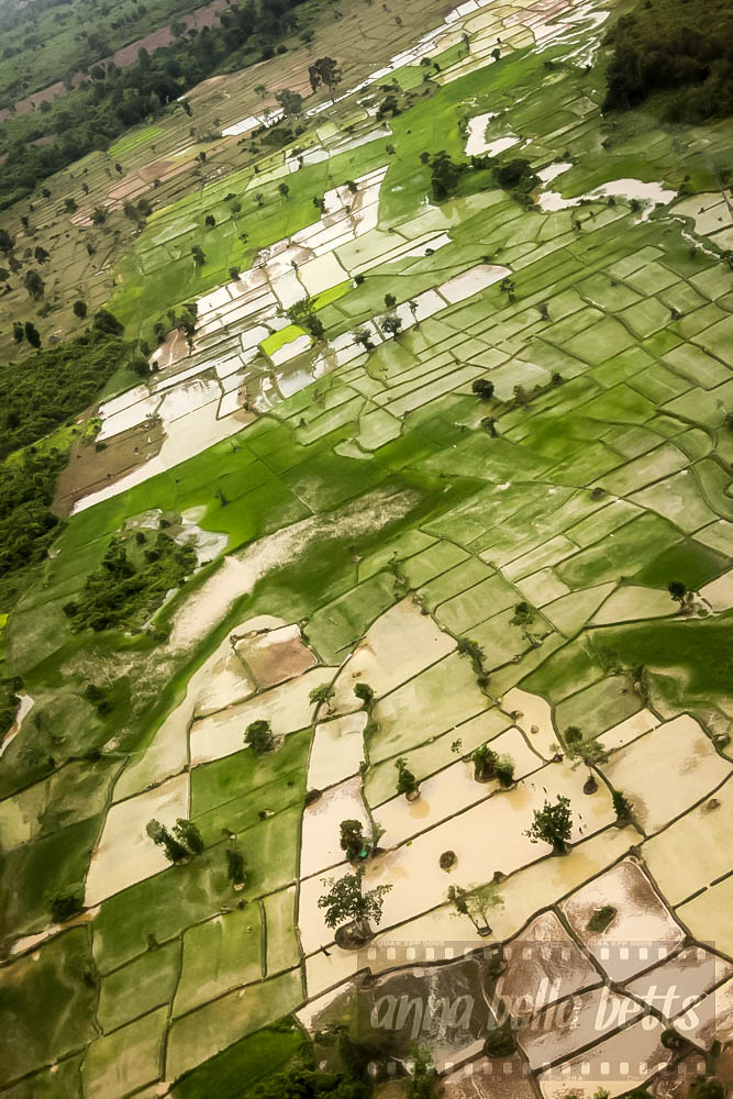 Green patchwork of rice fields as seen from helicopter